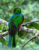 Quetzal 5 de Septiembre en Ixtapaluca