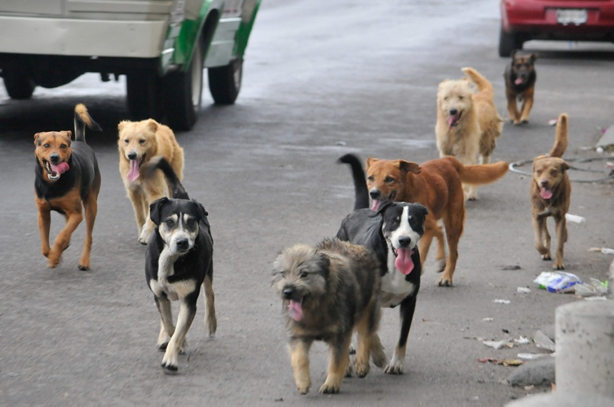 perros_callejeros-1_43