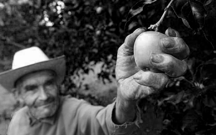 manzana-mexicana