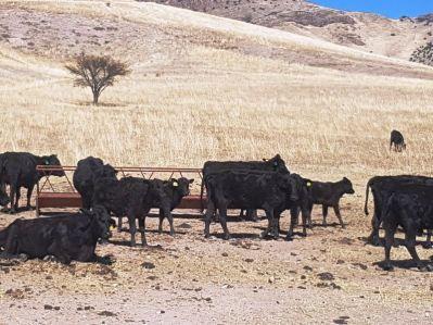 Ranchos Balleza (12)